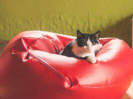 Wyprawka dla kota